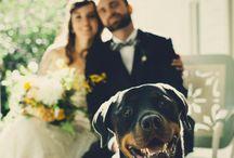 Animals and wedding