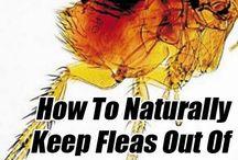 Natural Bug & Insect killers