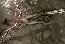 Microraptor / Microraptor is the smallest #dinosaur in the world which is about 40 cm long
