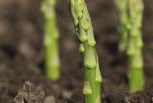 Spring Vegetables / Nothing ushers in the gardening season like spring vegetables