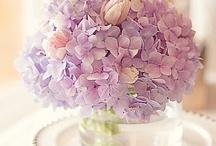 あじさい / 好きな花