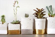 Petites plantes déco