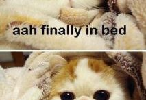 Ah-Dor-Able Animals / The cutest animals that will cheer up even the saddest person.