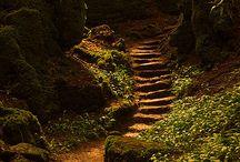 caminos de bosques