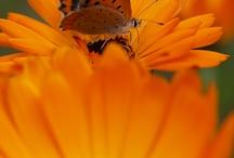 BUTTERFLIES / by Betzy