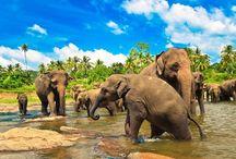 Naviguez au Sri Lanka / Partez à la découverte de la Côte sauvage du Sri Lanka !