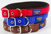 Dog Collars & Leads / A range of well-made dog collars & leads in different sizes. High tensile strength nylon and neoprene padding