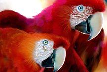Vogels / Papagaai