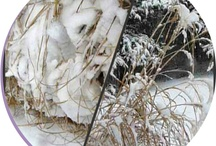 Hudson Valley snow