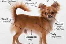 Dog Training Guide / Dog Training Tips and Guide