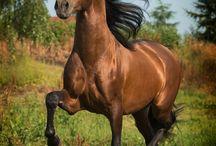 Schönes Pferd / Pferd