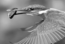 Birds /