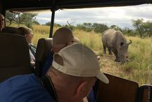 Kruger National Park Safaris / Go on Safari in Kruger National Park from Hazyview, Mpumalanga, South Africa these are the type of animals you can spot on a game drive safari holiday.