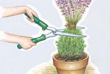 Topfpflanzen schneiden