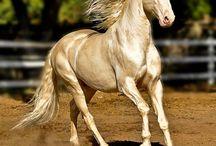 Breathtakingly Beautiful Horses / Stunning horses
