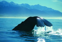 New Zealand Sightseeing/ Attractions