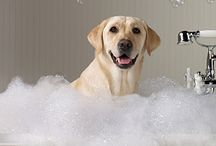Pet Recipes / Producing natural products for pets