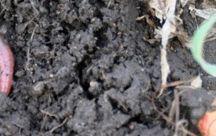 soil & effects