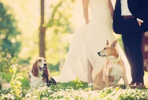 wedding puppies / by Villa Parker