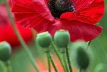 A,Flores e afins............