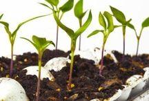 Germinar en tres días tus semillas