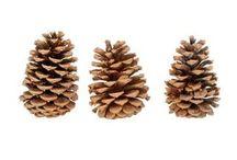 Pine cones crafts