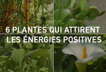 plantes et énergie