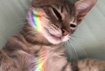 《 Gatos 》