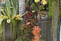 garden/plants