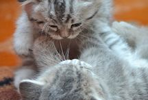 Sweet Cats