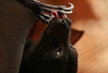 obsession! bats