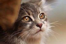 Hello Kitty :) / wunderschöne Miezen und Simon's Cat lässt grüßen