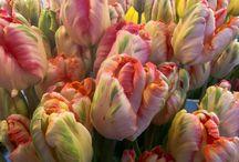 Photo de printemps