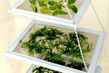 essiccare erbe