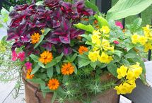 Containers / Container gardening for hot dry spots