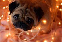 Dog world / by Emily Santos