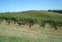 Sfeerfoto's Toscane
