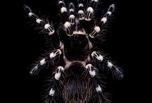 Fotografía Animal - Arañas y Escorpiones