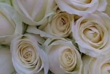 Kwiaty rodzaje