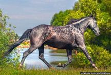 Rare & unusual colored horses, unaccustomed hybrids