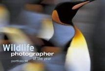 Wildlife Photographer of the Year Portfolios