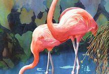 F comme flamingos