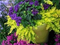 Window boxes and containers / by Kathy Sue Perdue (Good Life Of Design)