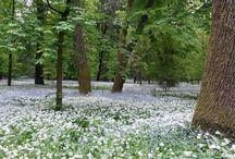 Fotografi dilettanti 2 / Il nostro meraviglioso e incantato Parco Reale di Monza