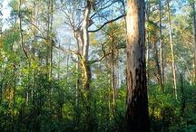 Western Australian Scenery