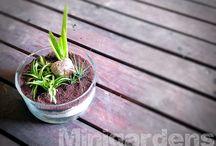 MINIGARDENS / Jardines miniatura y/o terrarios.