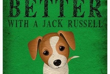 My Dog is Jack Russel