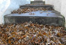 When leaves come to play! / Autumn, the season that ignites my soul.