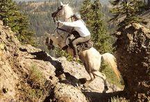 Spirit Of Endurance Horse Riding