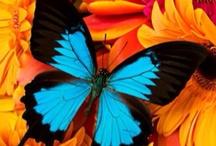 Křídla (ne jen) motýlí . . .